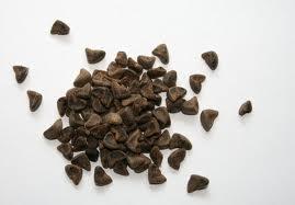 Kenaf Seeds
